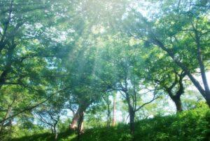 緑の森の日差し